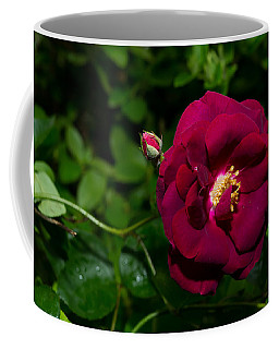 Red Rose In The Wild Coffee Mug