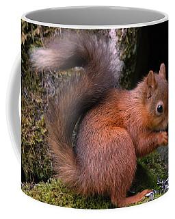Coffee Mug featuring the photograph Red Squirrel by Lynn Bolt