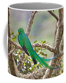 Resplendent Quetzal Coffee Mug