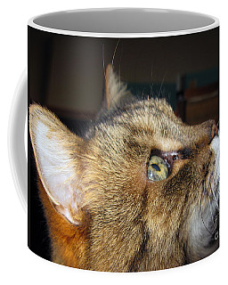 Coffee Mug featuring the photograph Runcius- The King Kitty by Ausra Huntington nee Paulauskaite