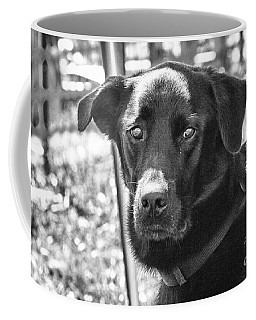 Coffee Mug featuring the photograph Sad Eyes by Eunice Gibb
