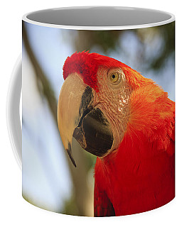 Scarlet Macaw Parrot Coffee Mug