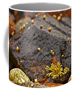 Seashells By The Seashore Coffee Mug