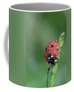 Seven-spotted Lady Beetle On Grass With Dew Coffee Mug