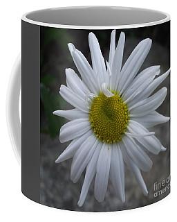 Shasta Daisy Coffee Mug