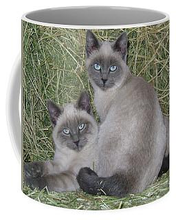Siamese Haystack Coffee Mug
