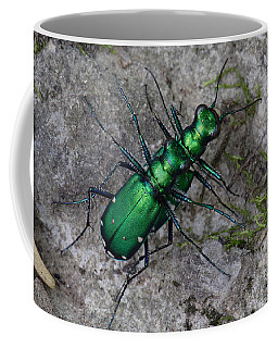 Six-spotted Tiger Beetles Copulating Coffee Mug