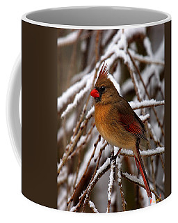 Snowbirds--cardinal Dsb025 Coffee Mug