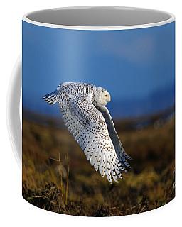Snowy Owl 1b Coffee Mug by Sharon Talson
