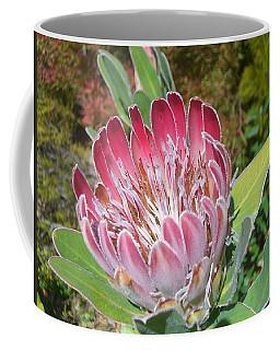 Coffee Mug featuring the photograph Soft by Lora Lee Chapman