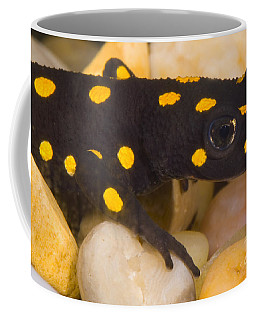 Strauchs Spotted Newt Coffee Mug