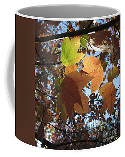 Coffee Mug featuring the photograph Sun-lite Fall Leaves by Donna Brown