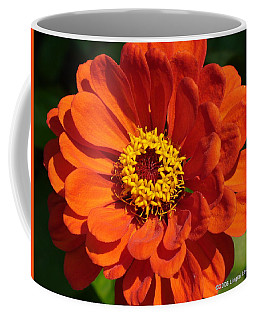 Coffee Mug featuring the photograph Sunny Delight by Lingfai Leung