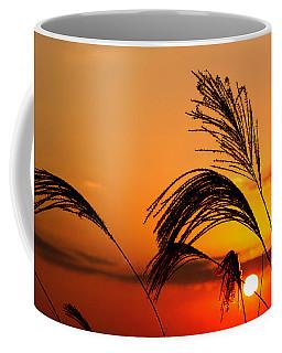 Sunset And Pampus Coffee Mug