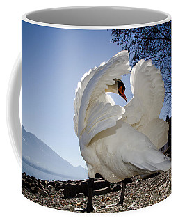Swan In Backlight Coffee Mug