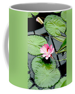 The Beauty Of Water Lily Coffee Mug