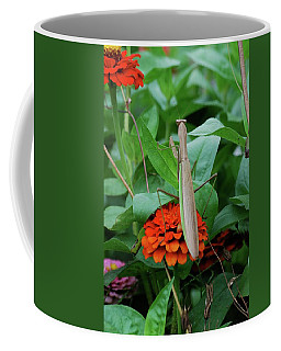 Coffee Mug featuring the photograph The Patience Of A Mantis by Thomas Woolworth