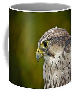 Thoughtful Kestrel Coffee Mug