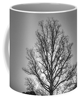 Through The Boughs Bw Coffee Mug by Dan Stone