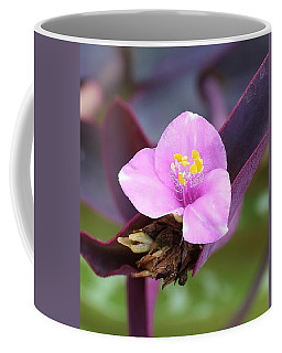 Tiny And Delicate Coffee Mug