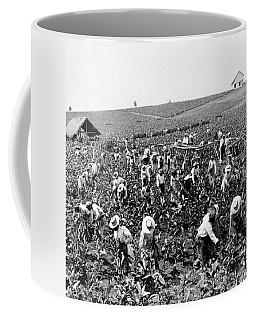 Tobacco Field In Montpelier - Jamaica - C 1900 Coffee Mug