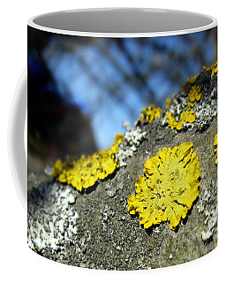 Coffee Mug featuring the photograph Tree Lichen by Ausra Huntington nee Paulauskaite