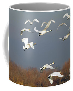 Tundra Swan Takeoff Coffee Mug