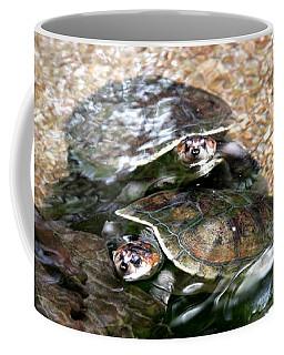 Turtle Two Turtle Love Coffee Mug