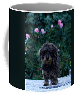 Coffee Mug featuring the photograph Waiting by Lainie Wrightson