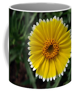 Coffee Mug featuring the photograph Wake Up by Joe Schofield