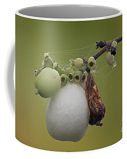 Coffee Mug featuring the photograph Webbed Berry by Eunice Gibb