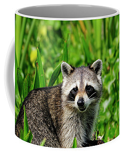 Wetlands Racoon Bandit Coffee Mug