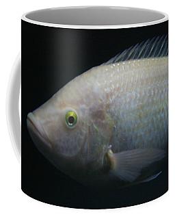 White Tilapia With Yellow Eyes Coffee Mug