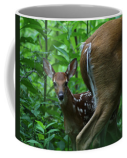 Whitetail Fawn Coffee Mug by TnBackroadsPhotos
