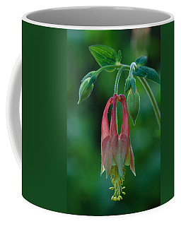 Wild Columbine Flower Coffee Mug