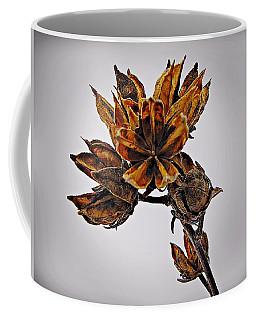 Winter Dormant Rose Of Sharon Coffee Mug