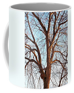 Coffee Mug featuring the photograph Winter Light by Chalet Roome-Rigdon