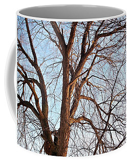 Coffee Mug featuring the photograph Winter Sunlight On Tree  by Chalet Roome-Rigdon