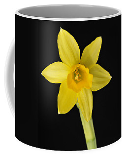 Yellow Daffodil Black Background Coffee Mug