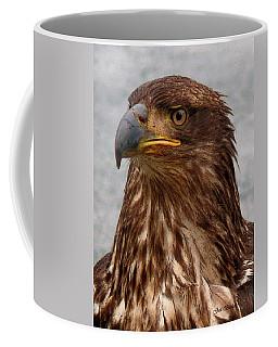 Young Bald Eagle Portrait Coffee Mug