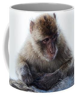 Young Gibraltar Macaque Coffee Mug