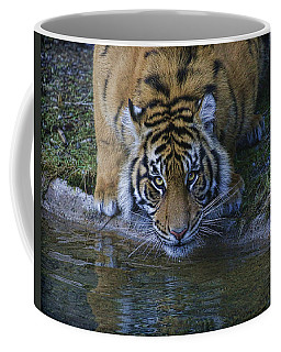 Coffee Mug featuring the photograph  Drink?  by Steve McKinzie