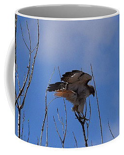 Coffee Mug featuring the photograph Red Tail Hawk Female Tower Rd Denver by Margarethe Binkley