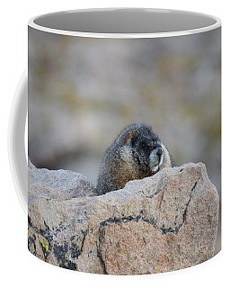 Coffee Mug featuring the photograph Marmot Mnt Evans Evergreen Co by Margarethe Binkley