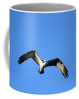 Coffee Mug featuring the photograph Osprey Burgess Res Divide Co by Margarethe Binkley