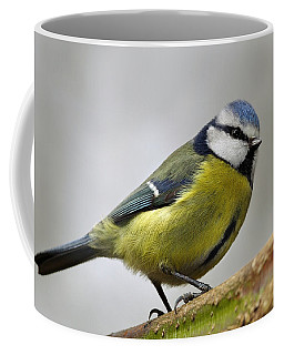 Blue Tit Coffee Mug