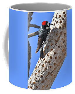 Acorn Woodpecker Coffee Mug