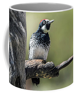 Acorn Woodpecker Coffee Mug