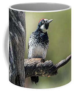 Acorn Woodpecker Coffee Mug by Tam Ryan