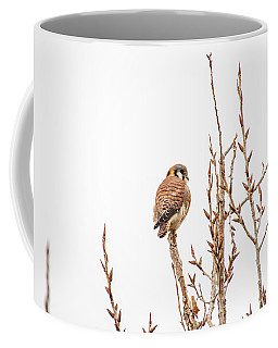 Coffee Mug featuring the photograph American Kestrel by Spencer Baugh